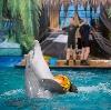Дельфинарии, океанариумы в Карабаново